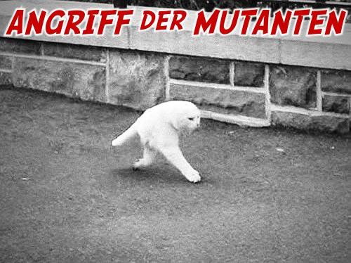 Angriff der mutanten -- darunter eine von der panoramaautomatik eines händis skurill fehlgezeichnete katze